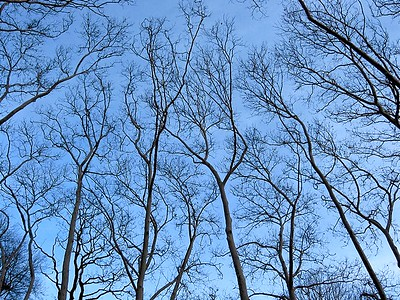 Central Park Tree Tops, New York 2005