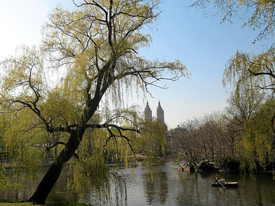 Central Park, New York City, Spring 2008
