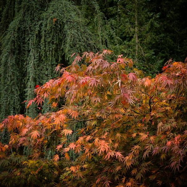 Colours of Autumn-11