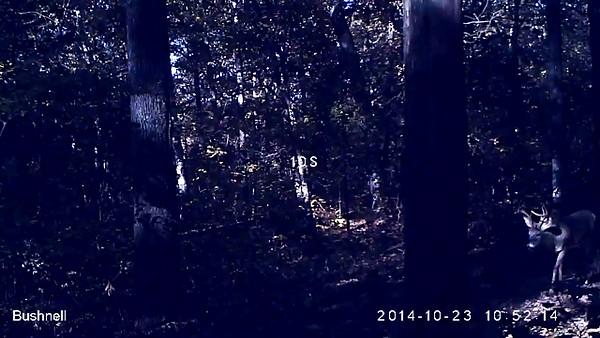 2014 Deer Hunt