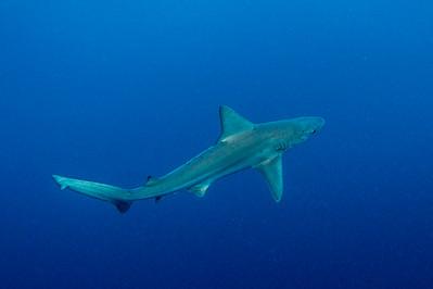 Sandbar Sharks 9