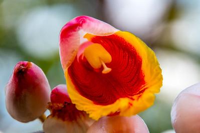 Waikiki Flower