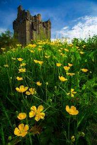 Scotland Eilean Donan Castle Flowers by Scott Donschikowski