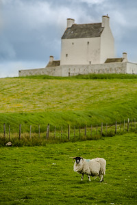 Scotland Corgarff Castle with Sheep vertical by Scott Donschikowski
