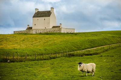 Scotland Corgarff Castle with Sheep by Scott Donschikowski