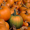 Pumpkins for sale, Massachusetts