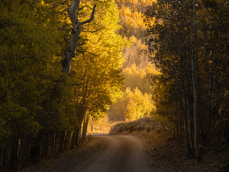 Aspen Road, Sweetwater Mountains