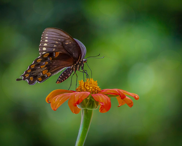 Butterfly on a flower.jpg