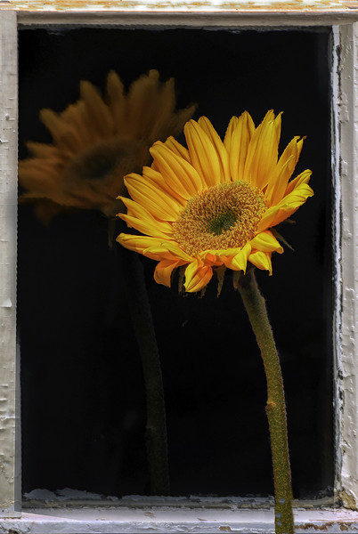window flower.jpg