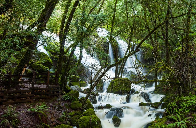 Marin Rain Forest