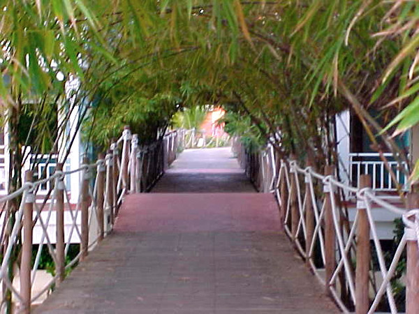 We don't know what it was but walking under this tree overhang every-night on our way to dinner was very romantic! :-)