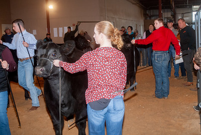 20200126_all_indian_cattle_013