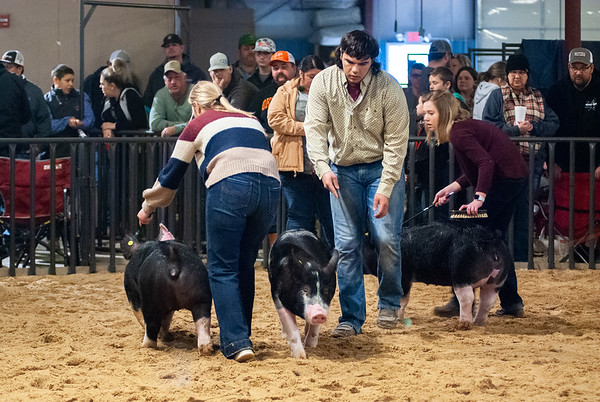 20200125_all_indian_swine-15