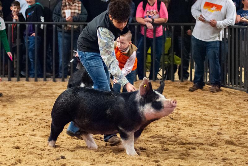 20200125_all_indian_swine-27