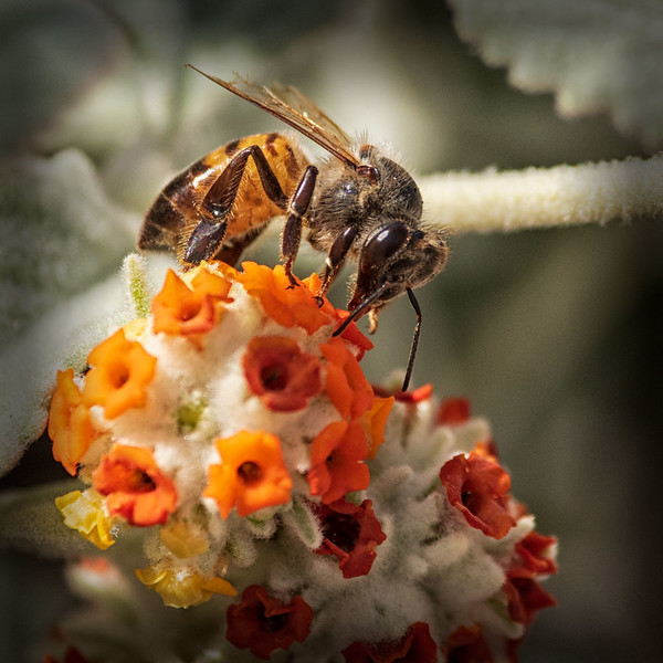 Insects_210415_7334