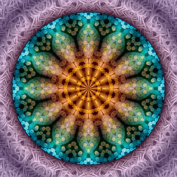 Magic Carpet Flower