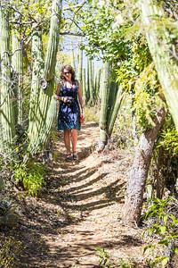 Cactus Walk