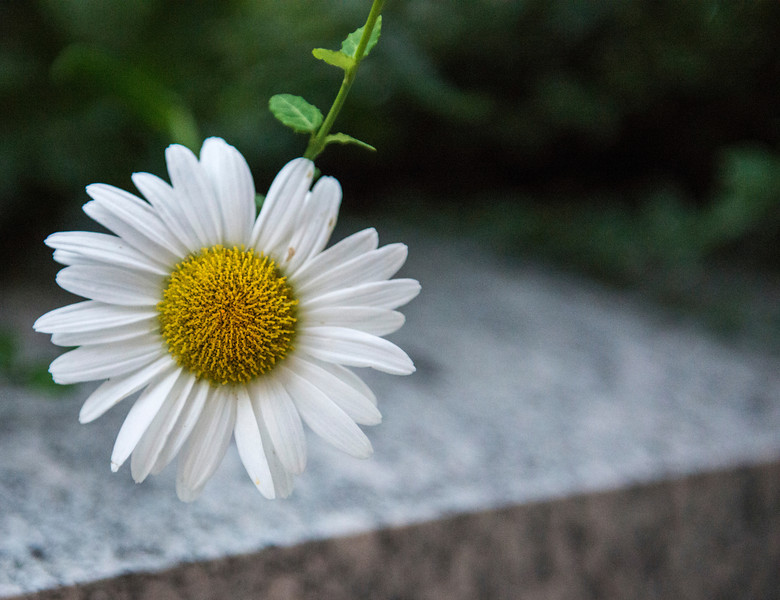Flower in the Concrete