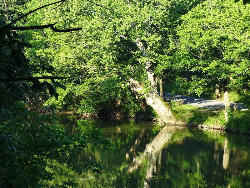 Reflection in the Conococheague Creek
