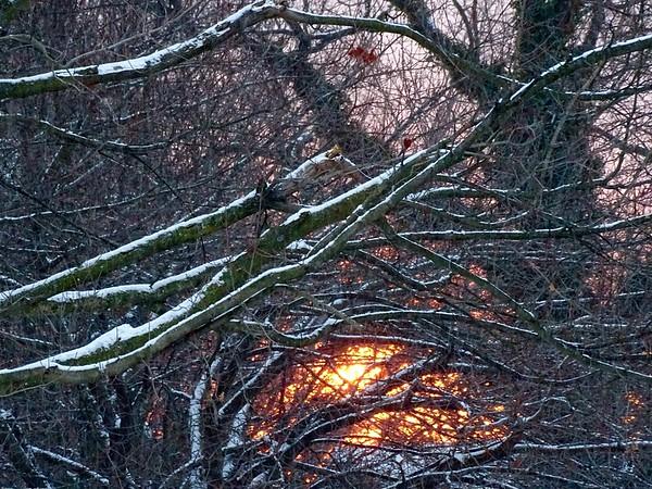 Morning Glow Through Snow