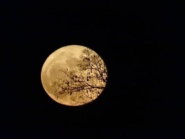 Full Frost Moon