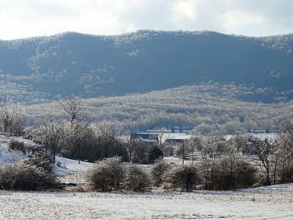 Landscape after ice storm