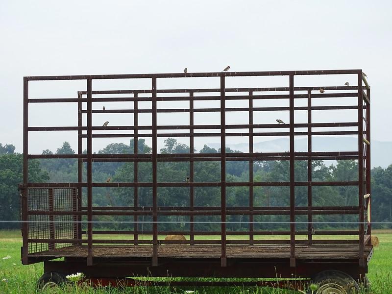 Hay wagon bird roost