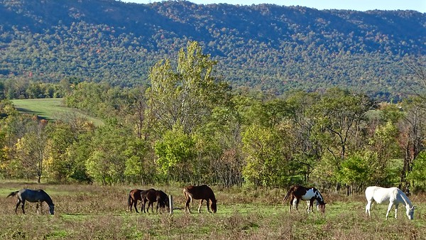 Horses on Shimpstown Road, Mercersburg, PA, with Cove Mountain in the background.
