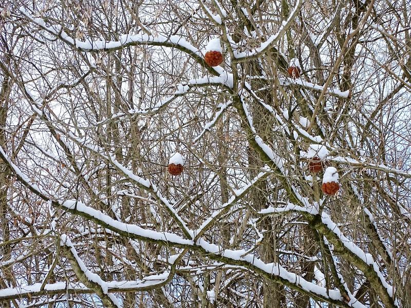 Natural Ornaments
