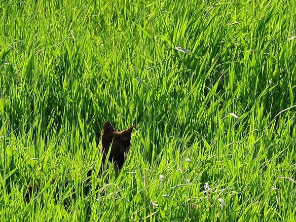 A hunter in the field.
