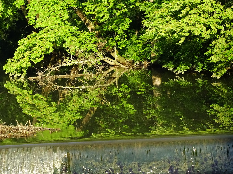 Reflection at old mill race  in the Conococheague Creek