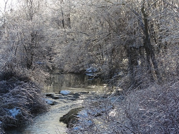 Icy branches by a stream