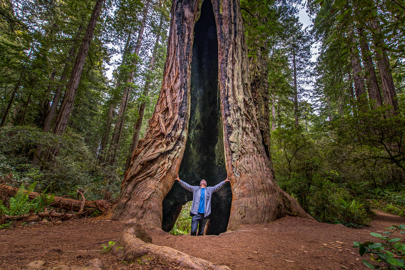 That's a Big Tree