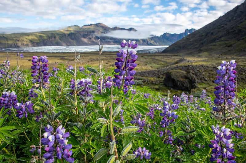 Bluebonnets and Glaciers