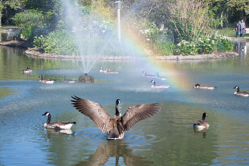 Glory Rainbow