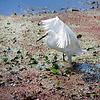 White Splendor