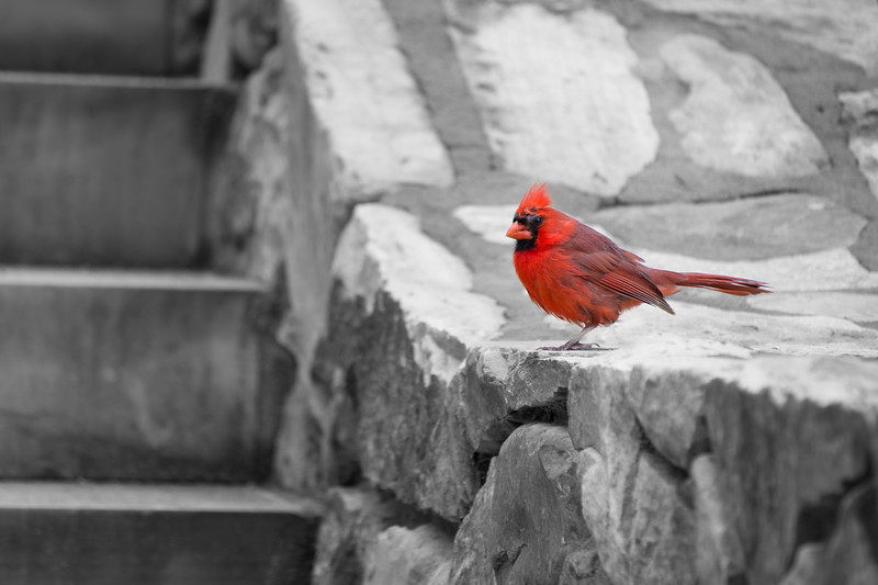 The Cardinal Picture