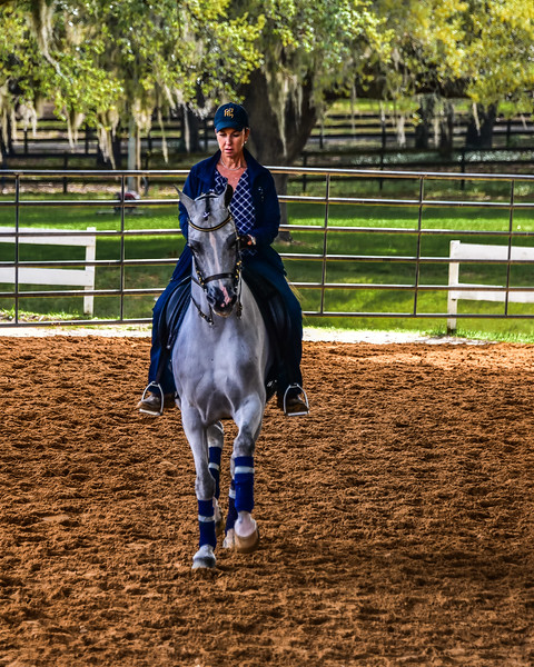 Arabian Horse Show - Grand Oaks