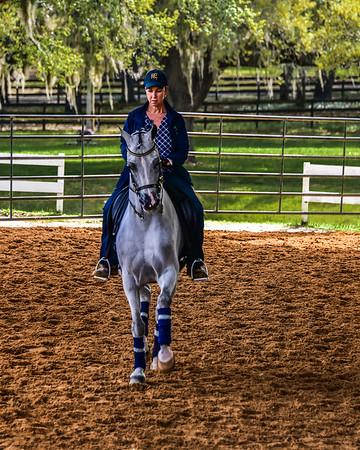 Arabian Horse Show - Grand Oaks