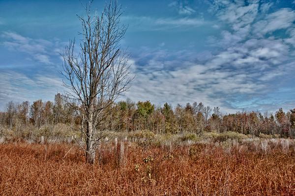 Huckleberry Swamp 2010
