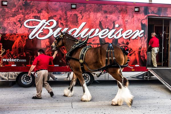 Budweiser Team 2016
