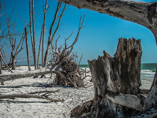 Seashore & Coastal