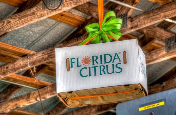 Citrus Farm 2013