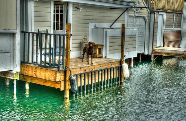 Canandaigua Boathouses 2012