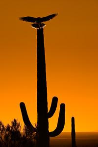 saguarolanding