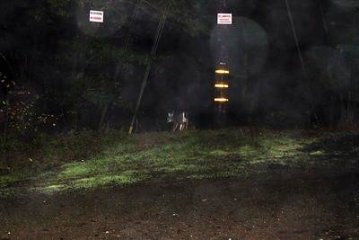 Pitch Dark Deer Photo. Occidental, CA, USA