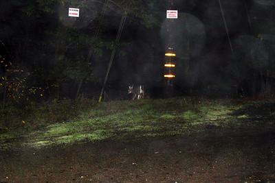 Pitch Dark Deer Photo. Occidental, CA, USA