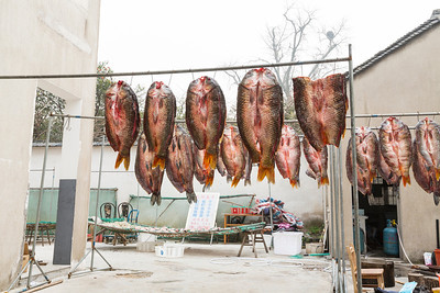 Fish. Mingyue Historic Town (明月谷村) - Taihu Lake (太湖) - Suzhou, Jiangsu, China (苏州,江苏,中国)