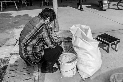 Cotton Processor. Suzhou, Jiangsu, China (苏州,江苏,中国)