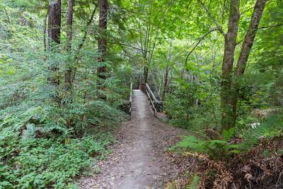 Bridge crossing Waddell Creek & Coast Redwoods (Sequoia sempervirens). Skyline-to-the-Sea Trail. Big Basin State Park, CA, USA